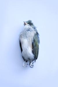 deadbird_dsc0008