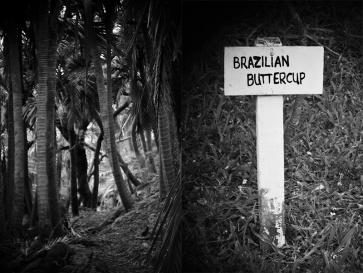 53_brazilian_DSC_1958