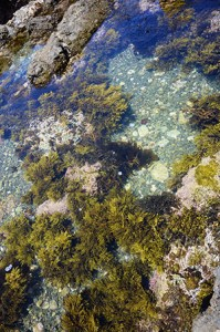 seaweed_DSC_5344