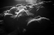 bedding_dsc_8137